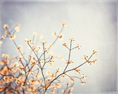 "Grey Nature Photography - light silver gray print peach cream yellow beige white floral branches wall art spring photograph, ""Grey Skies"""