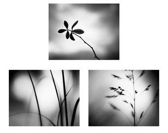 Black and White Photo Set, Three Photographs - 11x14, 8x10, 5x7 - nature prints botanical wall art set grey gray modern fine art photograph