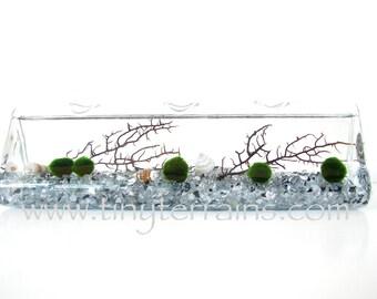 Marimo Terrarium: Modern Quintuplet Marimo Moss Ball Aquarium, Choice of Several Different Colors