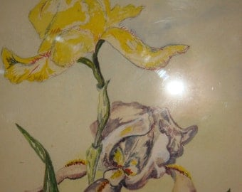 1945 Original Iris Watercolor Painting by Eva Keele