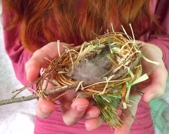 Bird Nest with Faery Magic