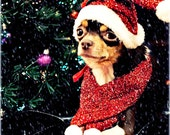 Small Dog or Cat Christmas Santa Hat and Scarf (COMES IN PINK)