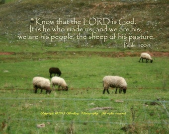 Grazing Sheep in West Virginia with Bible Verse