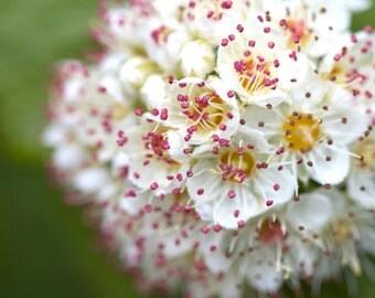 Flower print, flower canvas, macro flower photo, blooming flower, floral photography, oversized art, pink and green, nursery art, hopeful