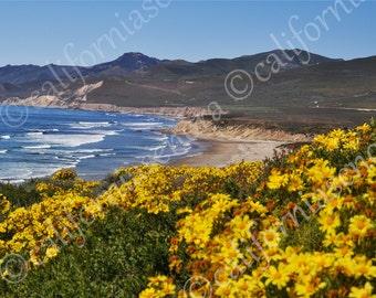 Jalama Beach West Central Coast California Photograph 11 x 14 Wild Flowers and Blue Skies