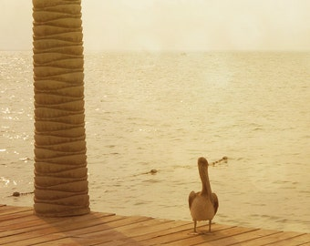 Glistening Pacific Ocean, Pelican on the Dock, Fine Art Beach Photography 8x10 11x14 16x20 For the Home Office, Golden Bokeh