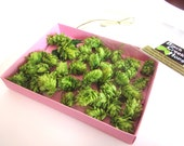 DIY - Boutonniere Hops for Weddings- 40 Hops Flowers with Natural stems - Direct from the Farm