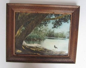 Vintage Picture Miami Beach Crandon Park Scene Lake Tree Photo 1979 Florida Historical Memorabilia