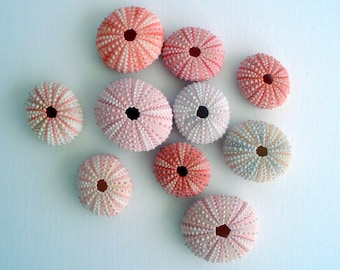 Pink Sea Urchin Set of 3 and a FREE air plant