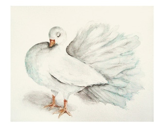 Winter White and Aqua Bird, Shabby Chic Decor, Fantail Pigeon Print from Original Watercolor Painting
