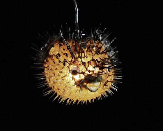 5 6 hanging light puffer fish real blowfish lamp for Puffer fish lamp