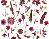 Dried Pressed Flowers Wedding Table Red Flower Mix for crafting