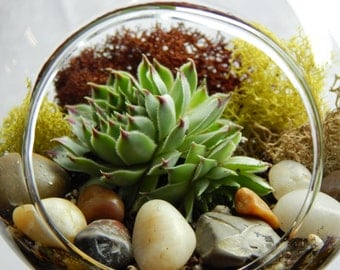 "Bliss Gardens Succulent Terrarium Kit with Moss and River Rocks / 4"" Round or 7"" Teardrop Glass"