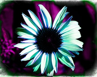 Flower style 6