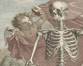 Anatomical Illustration Art Print, Skeleton Print, Albinus Anatomical Drawing, Skeleton And Cherub in Garden, Vintage Medical Illustration