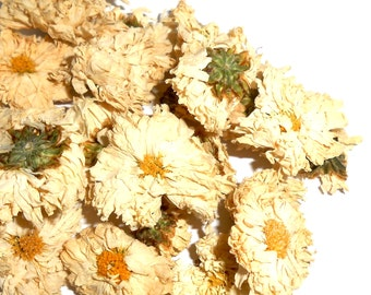 Organic CHRYSANTHEMUM FLOWERS - A History of Tradition and Folklore