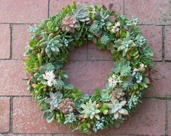Succulent Wreath/Centerpiece 14 inch diameter