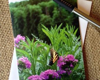 Virginia Swallowtail: Note Card