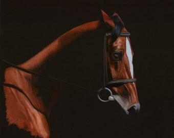 English Equestrian Horse