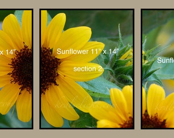 3 Piece Photograph Set, Mothers Day gift, Yellow Sunflowers, Home Office Wall Decor-Tabletop decor-Gift Idea for Her-Original Wall Art-Green