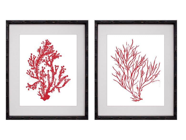 Fan Coral Drawing