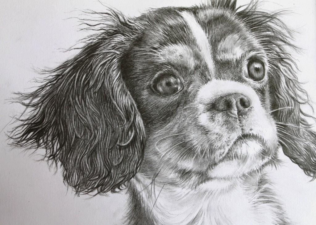 King Charles Cavalier Spaniel Original Pencil Drawing Dog