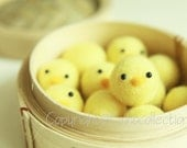 Needle Felted 8 Baby Chicks in Bamboo Steam Cooker - Holiday Gift - Christmas Gift - Ready to Ship
