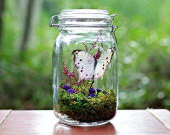 Butterfly Terrarium Kit, Mother's Day Gift, Kit & Tutorials, DIYer, Craft, Nature, gift ideas for her, child craft