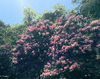 "Art Print - ""Rhododendron 2"""