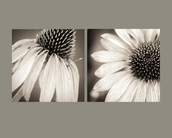Echinacea Diptych. Medicinal Flowers. Nature Photography Sepia Prints by OneFrameStories.
