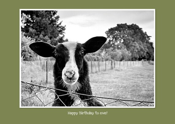 """Funny Photo Greeting Card with Adorable Goat for Happy Birthday Wishes. Flat (NOT FOLDED) 5""""x7"""" Framable Card."""