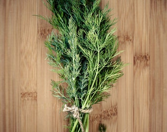 Kitchen art, Canvas wall art, Kitchen herb decor, Gardening art, Kitchen photography // Culinary Herbs No. 3 – Dill