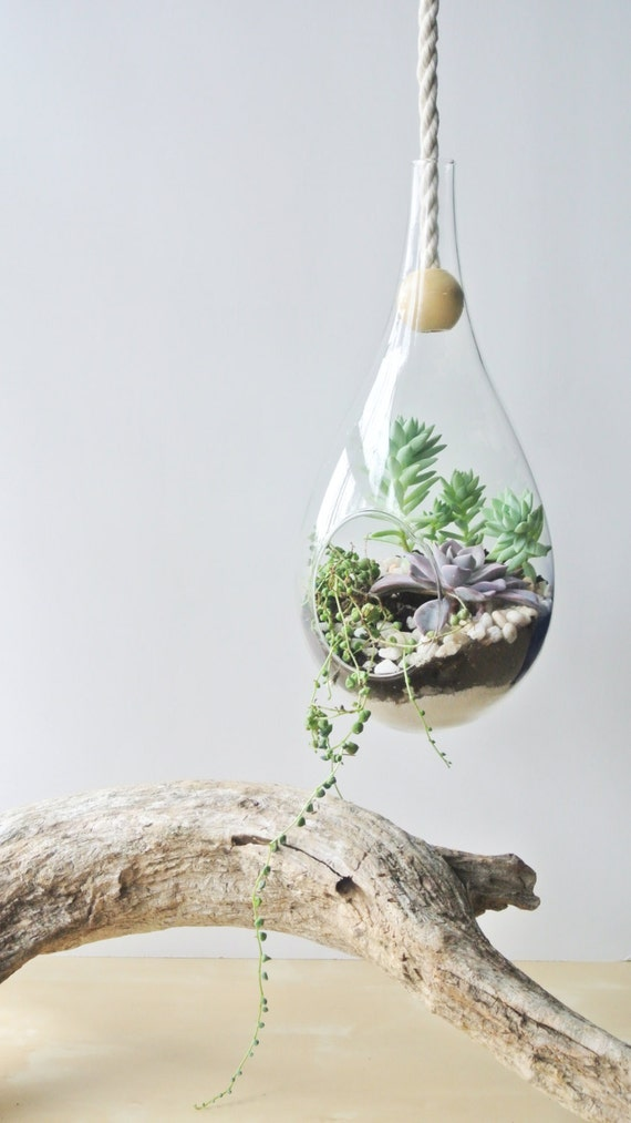 Modern Dewdrop Hanging Planter Planter Diy By Thezensucculent