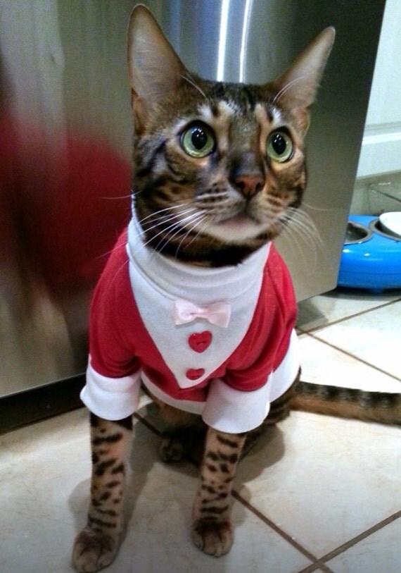 valentines day cat tuxedo