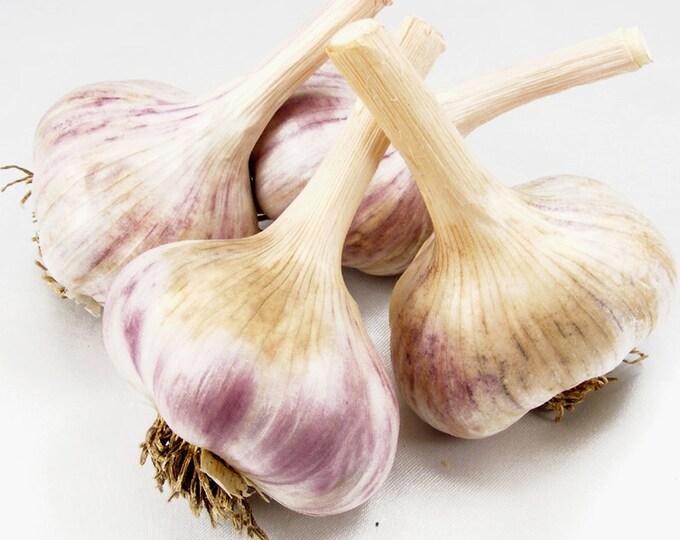 Persian Star Garlic Bulbs Organic Grown Gourmet 1/2 Lb For Planting or Cooking Fall Shipping