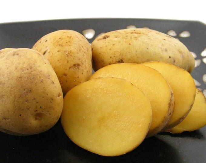 Yukon Gold Seed Potatoes Certified Organic and Virus Free 5 Lbs. Spring Shipping Yellow Potatoes Non-GMO