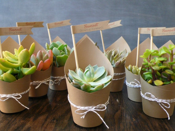 Wedding Gift Ideas Plants : Succulent Party Favors Set of 5 by foundpurpose on Etsy