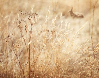 Nature Photography, Rabbit, Meadow, Summer Grasses, Sunny, Rustic, Home Decor.