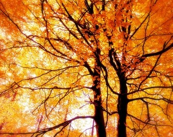 Nature Photography, Autumn, Forest, Fall,Trees, Orange, Fine Art print, Home Decor.