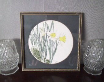 Wild Daffodil framed print 1974