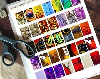 1x2in Digital Collage Sheet - BUTTERFLY WINGS - dominoes tiles - download