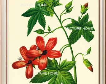 Red Tropical Flower Botanical Print 55 Beautiful 8X10 Antique Redoute Art Room Decoration Wall Art to Frame