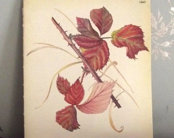 English Countryside Edwardian Illustration of Bramble Leaves Vintage Book Page Wall Hanging