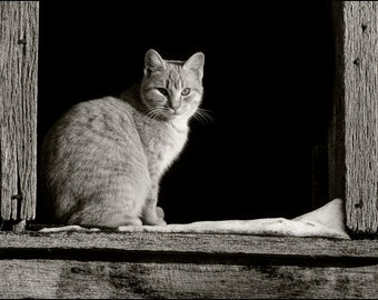 Photography - Black and White, Barn Cat, Fine Art