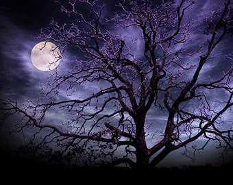 Moon and Tree Photography Art Print