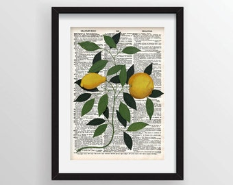 Lemons Botanical Illustration on Vintage Dictionary Page