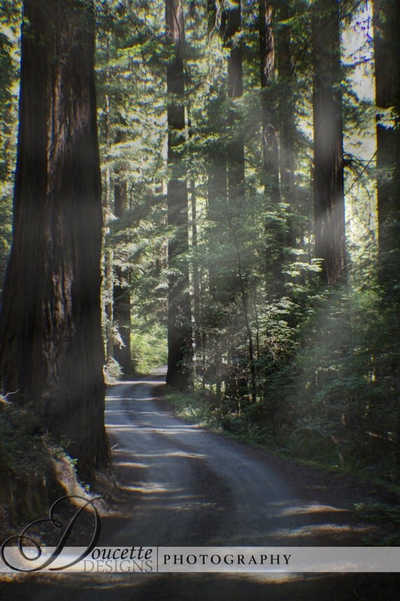 Landscaping With Redwood Trees : California redwood trees trail landscape nature woodland photography