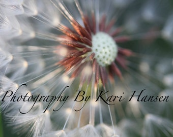 Fine Art Photography Abstract Dreamy Cottage Decor Nature Photography Dandelion