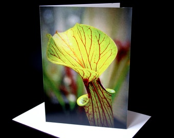 Green Sarracenia Plant Greeting Card / A6 Blank Notecard / Thank You / Birthday / Mother's Day / Get Well Soon / Sympathy Card