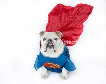 Superman English Bulldog Print, Fine Art Photography Print, Purrfect Pawtrait Pet Photography, Animal Photography